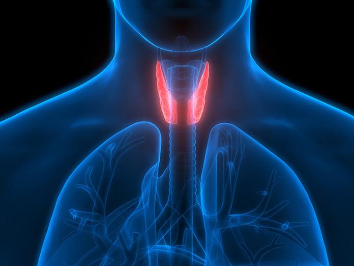 TSH: ormone della tiroide